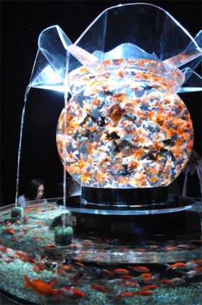 Art Aquarium in Nihonbashi